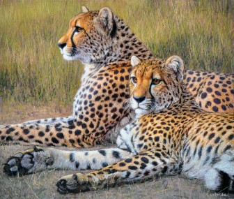 Pair of Cheetahs by