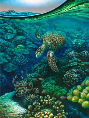 Tortuga y Corales by Carlos Hiller