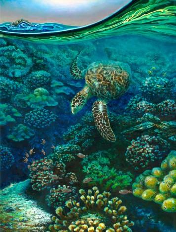 Tortuga y Corales