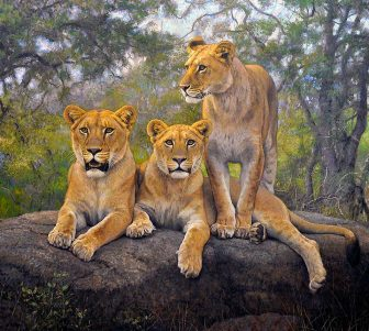Lionesses by