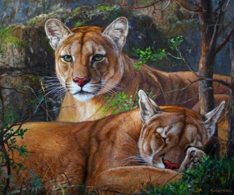 A Pair of Pumas by Gabriel Hermida