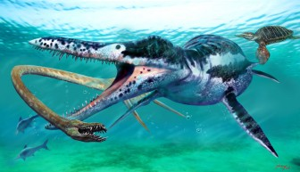 A Pliosaur attacks a Plesiosaurus by