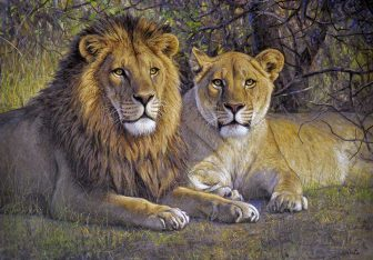 Lion Couple by Gabriel Hermida